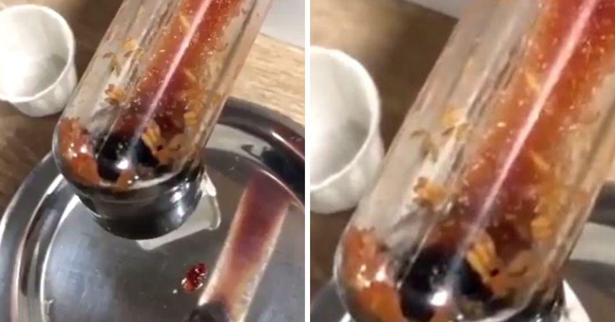 maggots in ketchup