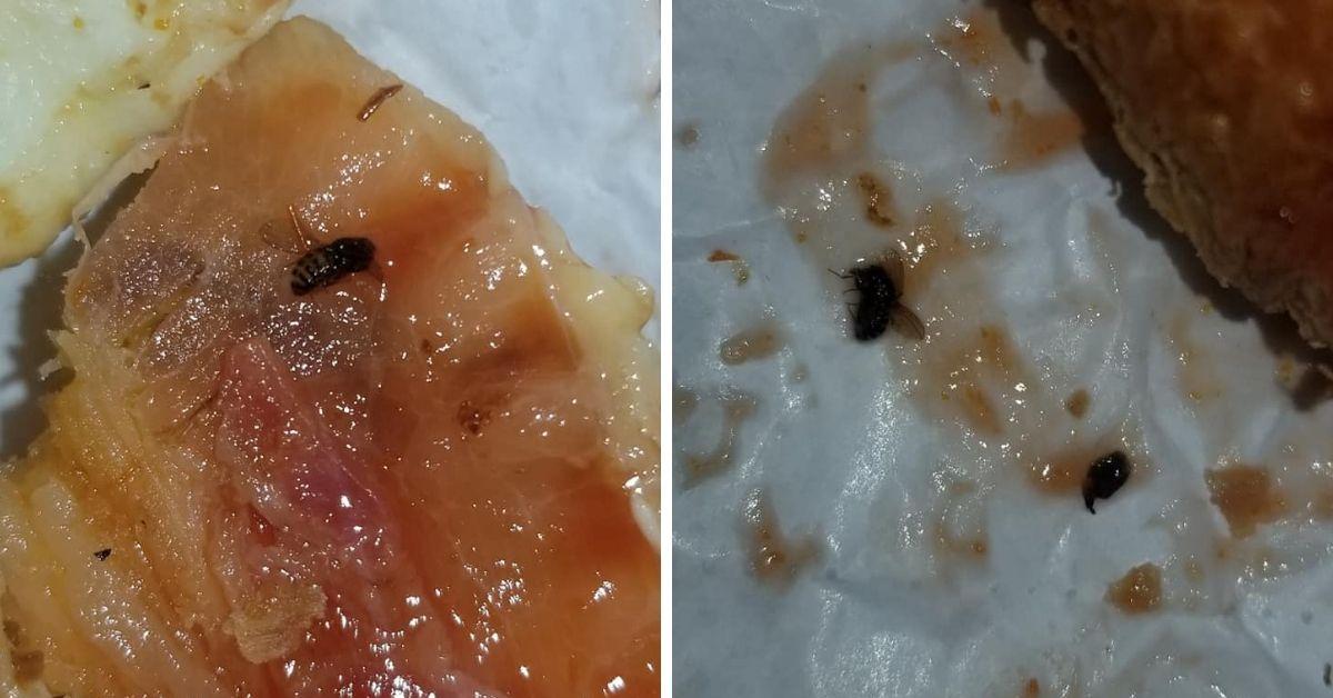 bugs in sandwich