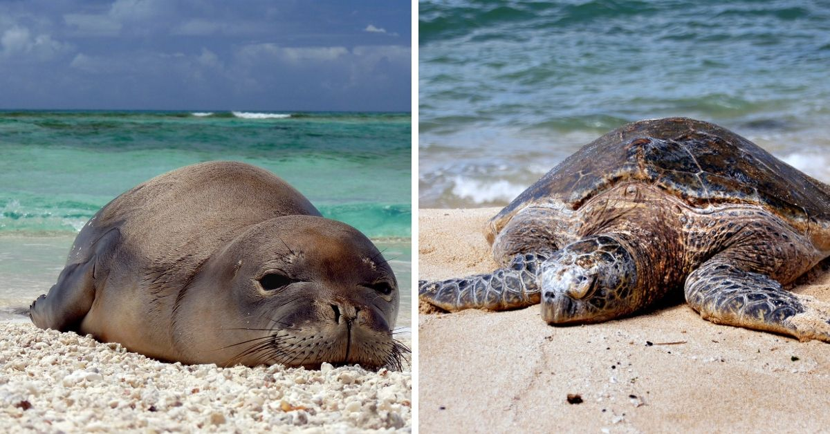 seal and turtle