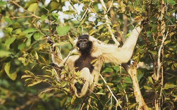 Monkey at Cardamom Tented Camp