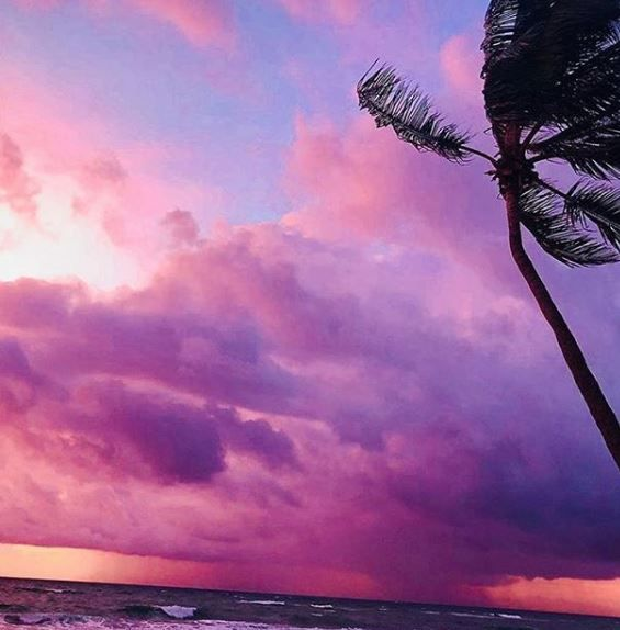 Purple sunset florida