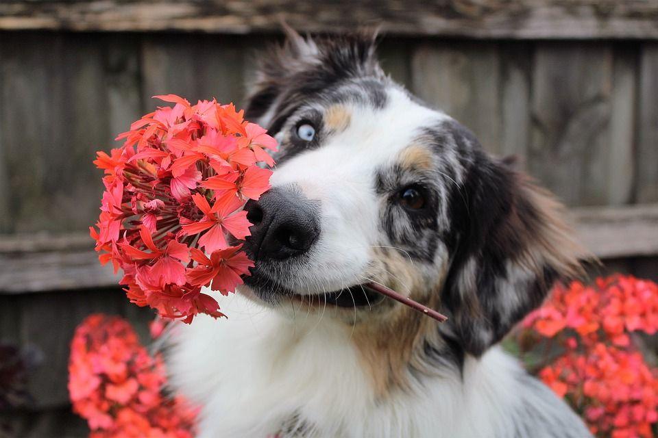 Happy dog eye contact