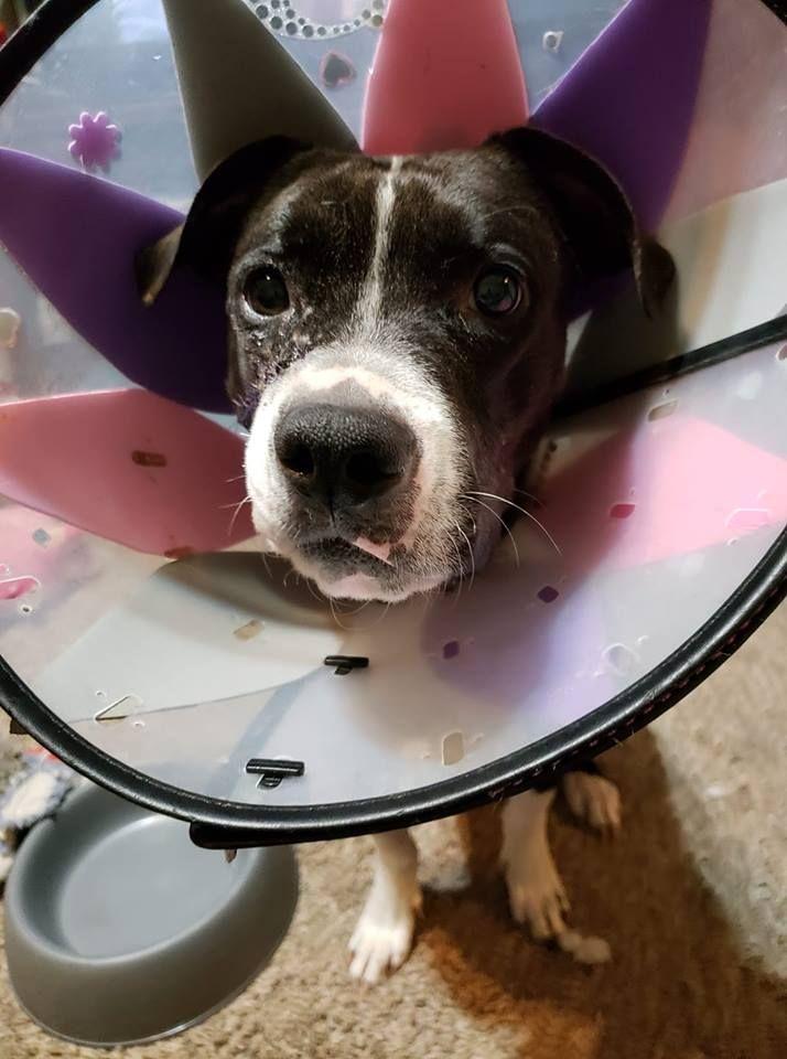 Gloria recovering post-op