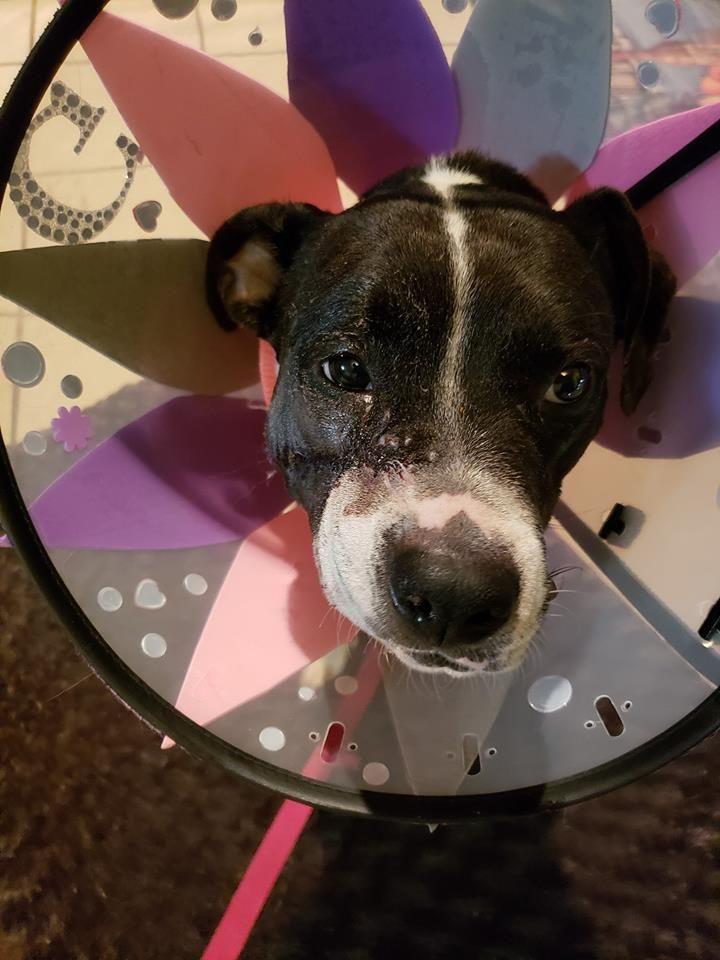 Gloria recovery postop