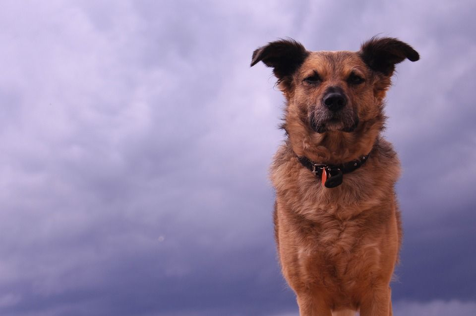 Dog standing in a storm