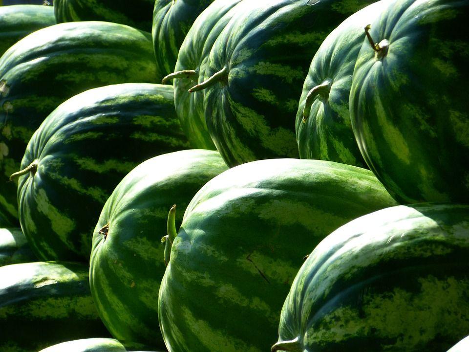 """""""Tails"""" on watermelons"""