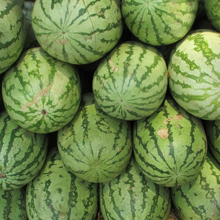 "Webbed ""pollination"" spots on watermelons"