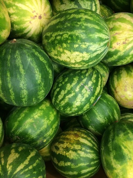 A yellow spot on a ripe watermelon