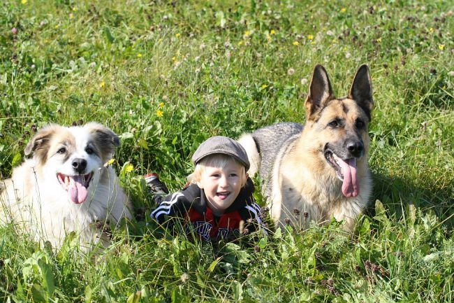 Boy dogs