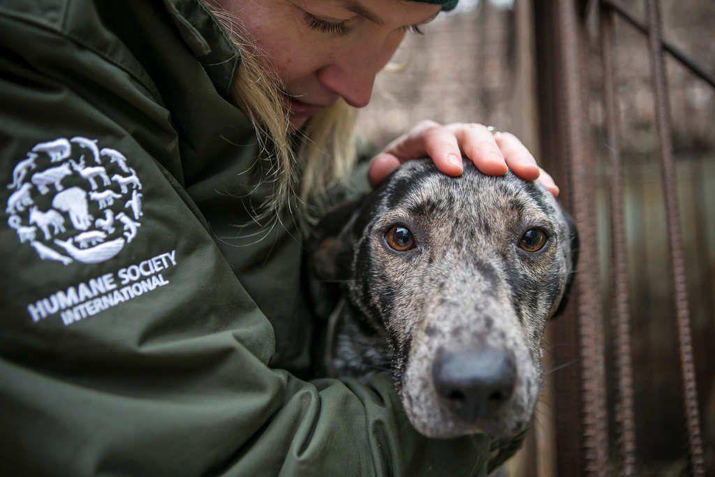 Humane Society International South Korea dog rescue