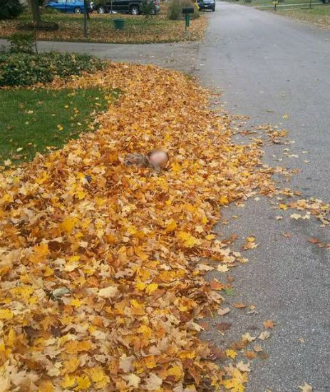 Pile of leaves warning