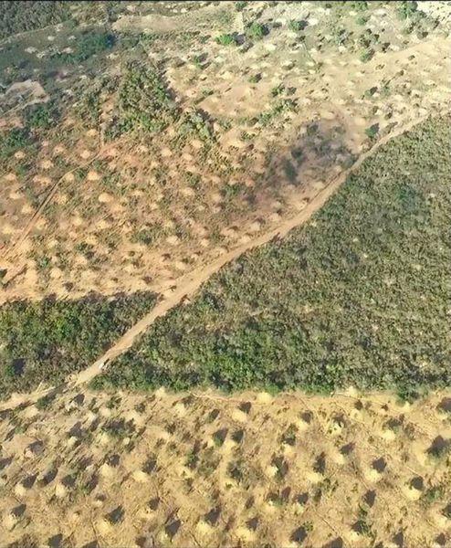 Giant Termite Hill