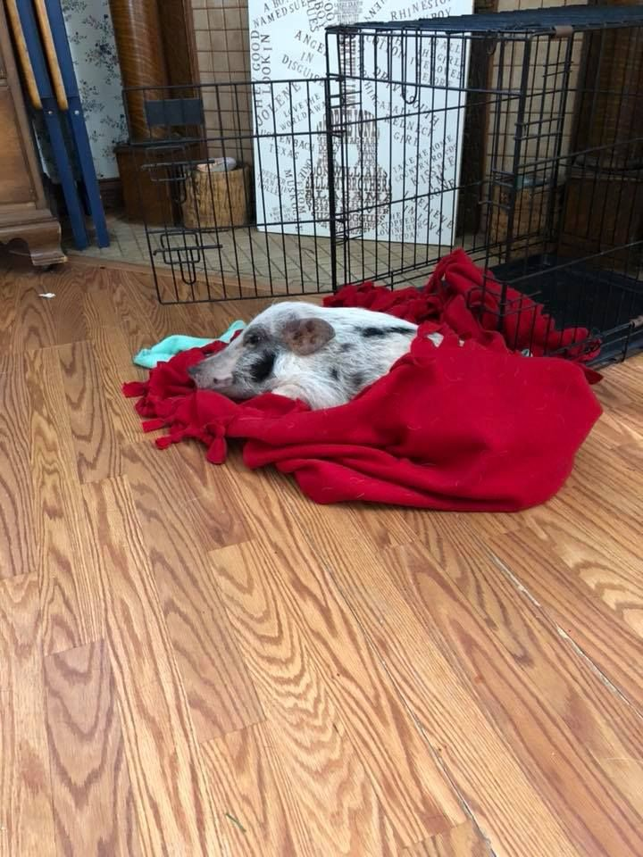 Beacon in red blanket