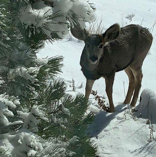 Beth Chapman deer
