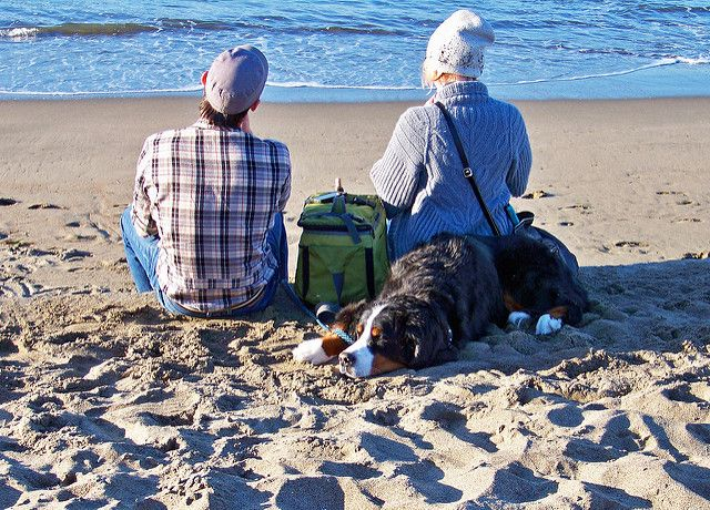 Couple dog beach