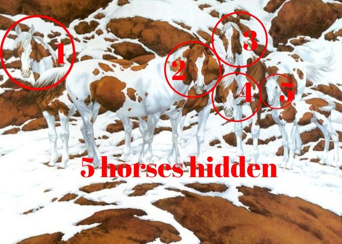 horses hidden answers