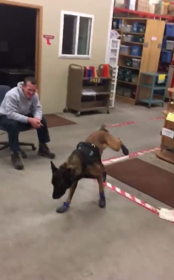 Jary the police dog in boots