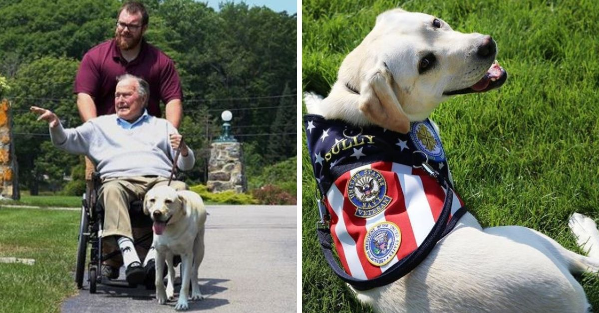 In photo, Bush's service dog honors the late president