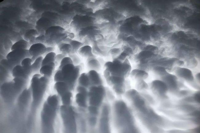 Udder clouds