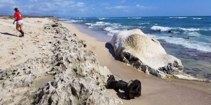 Hawaii Beach Whale