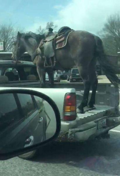 Horse pickup