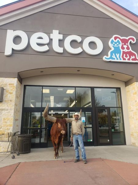 Oliver the Bull Petco