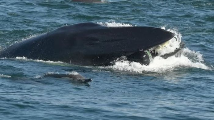 Whale diver